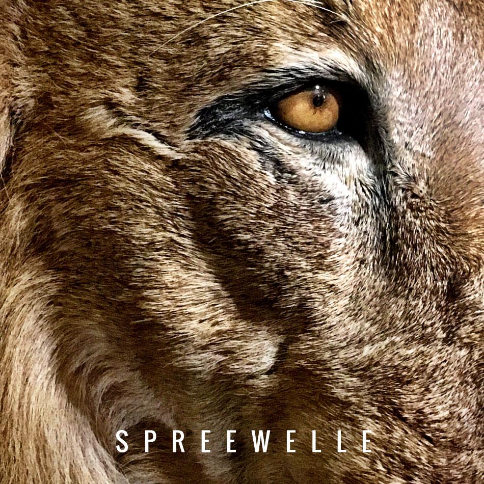 Spreewelle133