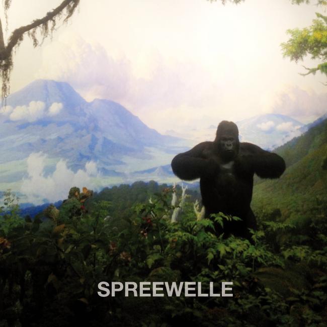 Spreewelle 84 Cover